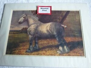 Percheron Heavy horse in field, mounted print for framing