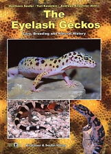 THE EYELASH GECKOS, Care, Breeding and Natural History.