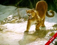 WILD MOUNTAIN LION COUGAR CAT ANIMAL PAINTING WILDERNESS ART REAL CANVAS PRINT