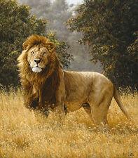 """Simba"" Simon Combes Fine Art Anniversary Edition Canvas - African Lion"