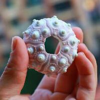 Seeigel Natürliche Muschel Shell Conch Muschelschale Home Aquarium Dekor Gif