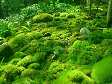 2 Gallons of Live Moss For Reptles Terrariums Fairy Gardens Dish Gardens