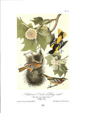 Baltimore Oriole or Hang-Nest Vintage Bird Print John James Audubon ABONA#225