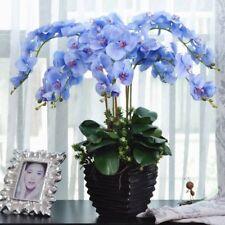 New listing Bulk Seed 100 Blue Phalaenopsis Seeds Bonsai Bonsai Flower Seed S076