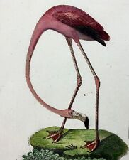 1793 John Latham - RED FLAMINGO - hand coloured copper engraving