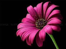 NATURE PLANT FLOWER PETAL PINK BEAUTIFUL POSTER ART PRINT HOME PICTURE BB1595A
