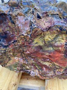 Amazing ARIZONA RAINBOW PETRIFIED WOOD BEAUTIFUL COLOR  DOBELL