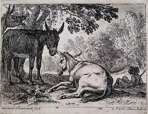 Herman van Swanevelt - Donkeys - Old Master Etching ca.1650