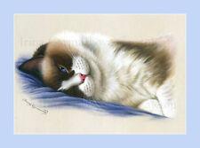 Ragdoll Cat A Time To Think Print by Irina Garmashova