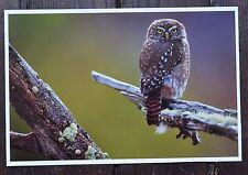 PHOTO 16X25 cm qualité Chrom Centric sur carton oiseau