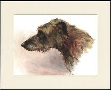 SCOTTISH DEERHOUND LOVELY DOG HEAD STUDY PRINT MOUNTED READY TO FRAME