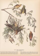 "1942 Vintage AUDUBON BIRDS #197 ""RED CROSSBILL"" GREAT Color Art Plate Lithograph"
