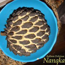 ~NANQKA~ Rollinia Deliciosa Fruit Tree Prickly Custard Apple LIVE 30-48+ PLANT