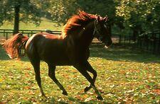 1973 Ron Turcotte SECRETARIAT Claiborne Farm Horse Racing 8x10 Photo TripleCrown