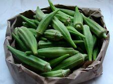 1500 Seeds 100 grams Ladies finger Okra Green Fruit good for health Wholesale