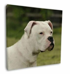 "American Staffordshire Bull Terrier Dog 12""x12"" Canvas Wall Art Pic, AD-SBT9-C12"