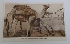 Vintage post card Postcard - Watering Camels , Aden , Yemen ,  Middle East