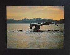 The Image Bank Golden Silence Poster Bild Kunstdruck 38,5x50cm - Portofrei
