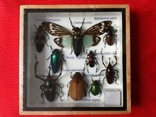 REAL EXOTIC HUGH 9 INSECT DISPLAY TAXIDERMY ENTOMOLOGY JEWEL BEETLE INSECTS