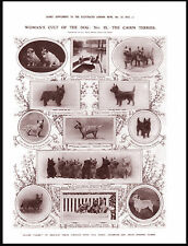CAIRN TERRIER NAMED CHAMPION AND PRIZE WINNING DOGS LOVELY DOG PRINT POSTER