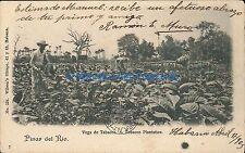 CUBA PINAR DEL RIO VEGA DE TABACOS 1905Nº 124