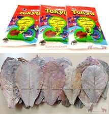 "10 x 4-7"" INDIAN ALMOND Leaf BETTA Goldfish Carp Guppy fish Food Mosquito Larvae"