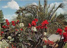 B35788 Insel Mainau Palmen und Indisches Blumenrofhr  germany