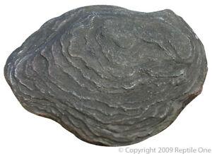 Reptile One R1-46536 Heat Rock Medium 12W 18.5x14.8cm for Terrarium & Reptiles