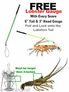 LOBSTER Snare Snair Tickle STICK Catch Bag Net bug Inn Lobster locking Loop