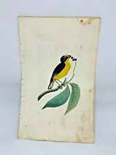 Violaceous Tanager - 1783 RARE SHAW & NODDER Hand Colored Copper Engraving