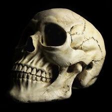 Life Size 1:1 Resin Human Skull Model Anatomical Medical Teaching Skeleton CA