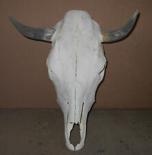 "New 15 1/2"" wide Steer Skull Horn,Longhorn,cow,bull,Me xico,Feed taxidermy,head"