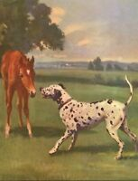 Dalmation And Horse Colt Foal Dog Wesley Dennis Book plate print