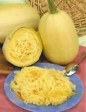 Squash seeds Spaghetti, Heirloom Vegetable Seed from Ukraine