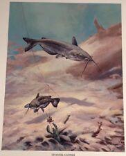 Channel Catfish Vintage Bob Hines Fish Art Print US Dept Of Interior 1972