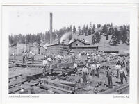 "*Postcard-""The Arizona Lumber Company"" -early 1800's- @ *Flagstaff, AZ (A97-2)"