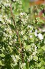 Puro Biologico 100% Olio 5ml; Tea Tree, Eucalipto, Timo, Maggiorana