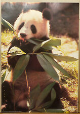 (PRL) ANIMALE PANDA ANIMAL VINTAGE AFFICHE ART PRINT POSTER COLLEZIONE COLLECTOR