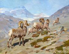 Rungius Carl Bighorn Sheep Nigel Pass Alberta Canvas Print 16 x 20   #5562