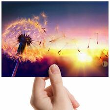 """Beautiful Dandelion Sunset Small Photograph 6"""" x 4"""" Art Print Photo Gift #3773"""