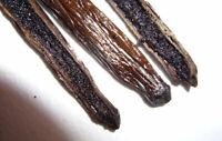 """10 Madagascar Grade A Gourmet Vanilla Beans 6"""""""