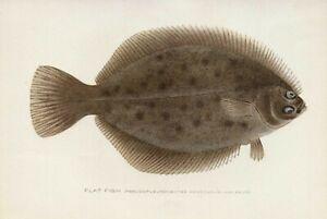 S F Denton FLAT FISH  13x19 Reproduction Excellent