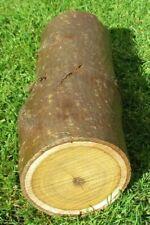 Laburnum Wood Woodturning Log - 10 inches tall