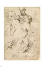 LEONARDO DA VINCI superficial anatomy of shoulder & neck ART POSTER 24X36