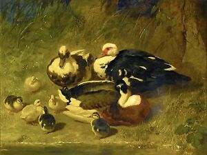 MUSCOVY DUCKS AND DUCKLINGS Accent Tile Mural Kitchen Bathroom Backsplash 8x6