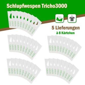 Schlupfwespen gegen Kleidermotten 8 Karten x 5 Lieferungen