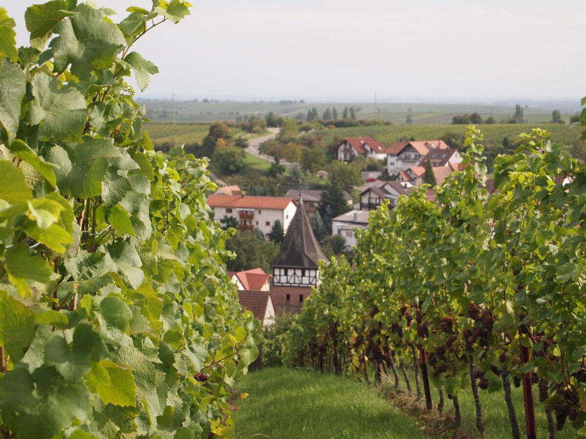 Weingut Kopp