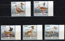 COMORES 2009 LES BECASSEAUX VOGEL BIRDS AVES SIDE STAMPS MNH