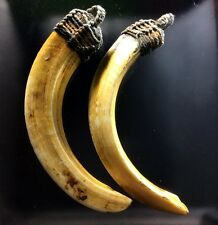 2 PC Wild Boar Hog Spike Teeth Pig Tusk Talisman Thai Amulet Antique Protective