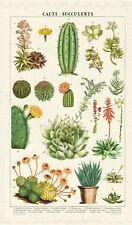 Cavallini - 100% COTONE NATURALE VINTAGE Asciugamani - 80x47cms-piante grasse cactus/